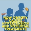 How obesity causes hypertension and potential treatments